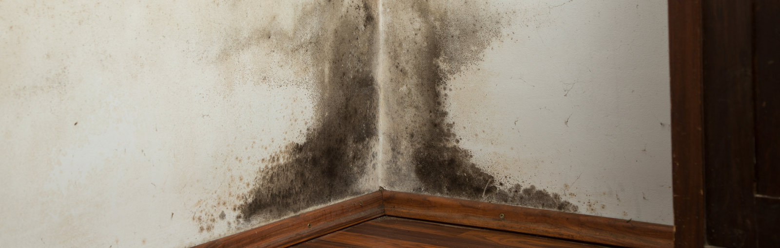 Mold in a corner