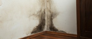 Mold on corner wall