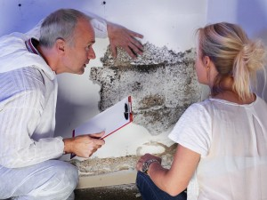 Mold Removal Consultation
