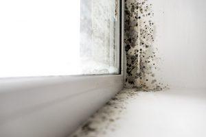 mold on window mold remediation vancouver wa